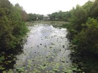 TampaArea-garden.edit